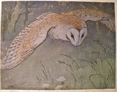 Allen W. Seaby (British, 1867-1953). Barn owl.