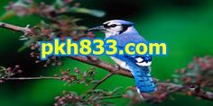 ~✿ღ 카지노싸이트주소~✿ღ PKH833.C O M무료체험머니~✿ღ ~✿ღ 카지노싸이트주소~✿ღ PKH833.C O M무료체험머니~✿ღ ~✿ღ 카지노싸이트주소~✿ღ PKH833.C O M무료체험머니~✿ღ ~✿ღ 카지노싸이트주소~✿ღ PKH833.C O M무료체험머니~✿ღ