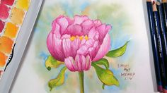 LIVE: Paint a Peony Flower with Inktense or Watercolor Pencils