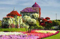 Resultado de imagen para dubai miracle garden