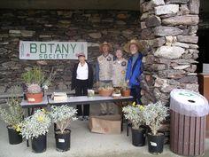 Anza Borrego California botany society plant sale at the visitor center