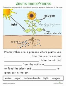 What is Photosynthesis? Worksheet