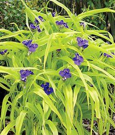 230 Zone 7 Sun Perennials Ideas Perennials Sun Perennials Flowers