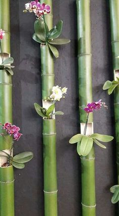 Creative Gardening: Orchid and Bamboo Wall Garden The Orchid Fever. Create a very unique wall garden with different kinds of orchids planted in a bamboo woods.Fazer ao redor do chuveirão.How to Care for Orchids So They Live & Grow Them Correctly So Garden Types, Diy Garden, Garden Projects, Garden Landscaping, Bamboo Garden Ideas, Garden Benches, Terrace Garden, Diy Bamboo, Bamboo Crafts