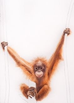 A Young Orangutan Hangs Out   by Janet Andrews