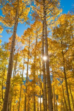 Autumn Aspens in Colorado - Shawn Beelman Photography Visit Colorado, Aspen Colorado, Scenic Photography, Autumn Photography, Colorful Pictures, Pretty Pictures, Beautiful World, Beautiful Places, Aspen Trees