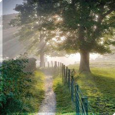Morning sunshine - looks great for a walk