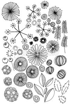 Abstract nature doodles: Stock photo description Hand drawn doodles of natural objects – seeds, leaves, pods etc
