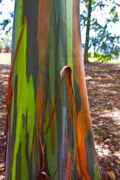 Segway Tour at World Botanical Gardens in Hawaii