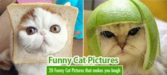 20 Hilarious and Funny Cat Pictures that makes you laugh. For more http://funnyneel.com/funny-images | http://funnyneel.com . Follow us www.pinterest.com/webneel/funny-pictures