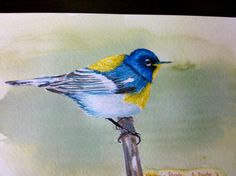 Blue & yellow bird watercolor made by Anne Durfee #watercolor