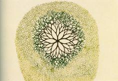 Ruth Asawa(Japanese/American, b.1926)    Desert Flower  1975     Inks on Paper