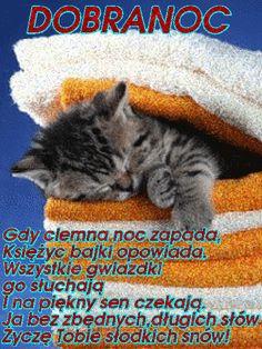 Wierszyki i gify na dobranoc: Gify na dobranoc kotki Magic Day, Good Night, Animals And Pets, Humor, Cats, Pictures, Frienship Quotes, Dog Love, Polish