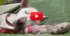 After Struggling To Survive In A Landfill, Miley Was Saved. But It Took Friendship To Truly Heal Her! | The Animal Rescue Site Blog