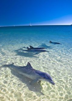 Dolphins are often seen in the waters off Siesta Key, FL