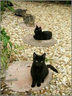 .Stepping stone cats.