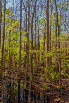 Swampland #1