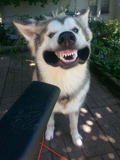 My dog loves to play with the leaf blower - Imgur