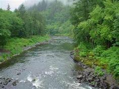 Oregon rivers and fall on pinterest for Nehalem river fishing