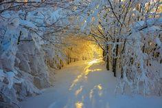 Beautiful Nature — sundxwn: Sunrise in the snowy woods by Roberto. Snowy Woods, Beautiful Places, Beautiful Pictures, Beautiful Flowers, Winter Beauty, Winter Landscape, Nature Pictures, Winter Scenery Pictures, Snowy Pictures