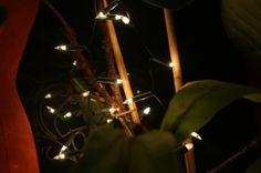 lights in my room :)