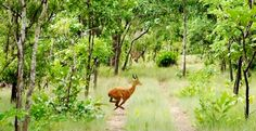 Tour Akwaba – Safari & Senoufo Tour in Cote D'Ivoire and explore this exotic place. Get travel guides and plan your trip to Cote D'Ivoire. Get best offers on your Cote D'Ivoire Tour packages. Parc National, National Museum, National Parks, Trekking, Safari, San Pedro, Exotic Places, Wanderlust