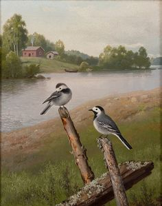 Ferdinand von Wright ( - Wagtails, oil on canvas, 44 x 36 cm. Flora And Fauna, Ferdinand, Western Art, Science And Nature, Pet Birds, Oil On Canvas, Culture, Prints, Animals