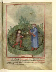 Nouvelle acquisition latine 1673, fol. 32, Récolte de la rue. Tacuinum sanitatis, Milano or Pavie (Italy), 1390-1400.