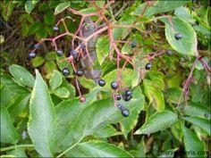 La farmacia de la naturaleza: usos medicinales de las plantas - Huertos Compartidos