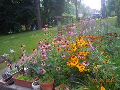 2015 - July Garden blooms