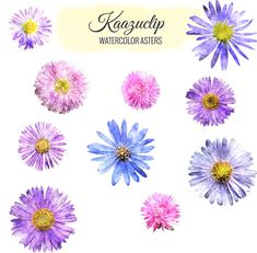 Watercolor Asters Collection  Commercial and Personal by kaazuclip