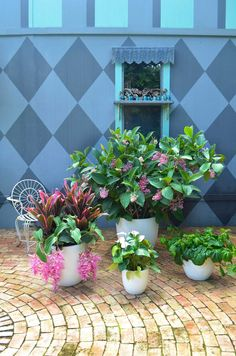 Lightweight fiberglass white planters from The Pottery Patch. Excelsa Gardens Loxahatchee, FL