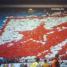 Crvena Zvezda... Red Star... Sever... Srbija