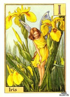 The Iris Fairy. Vintage flower fairy art by Cicely Mary Barker. Taken from ' A Flower Fairies Alphabet'. Click through to the link to see the accompanying poem. Cicely Mary Barker, Elfen Fantasy, Fantasy Art, Flower Fairies, Fairy Pictures, Vintage Fairies, Iris Flowers, Fantasy Illustration, Fairy Land