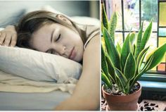 Put These Plants in Your Bedroom And You'll Sleep Better, Have you tried a heap of techniques to get good sleep Despite our earnest efforts the Sleep