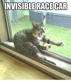 Invisible Race Car - Funny Animals with Captions LOL