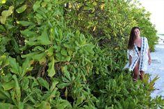 Pristine landscapes and tropical vegetation in Maldives #islandlife #indianocean #bucketlist #vacation #getaway #thulusdhoo #honeymoon