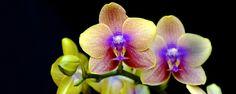 Os 3 erros mais comuns no cuidado com orquídeas - Se você chegou até aqui deve estar interessado em adquirir sua primeira orquídea ou, melhor ainda, já está com esta linda planta em mãos. Já avisamos: você corre o risco de se apaixonar e querer cada vez mais orquídeas!  Entretanto, alguns cuidados devem ser tomados para que a planta se mantenh... - http://www.lojaflamengo.com/ecoblog/2015/07/16/os-3-erros-mais-comuns-no-cuidado-com-orquideas/