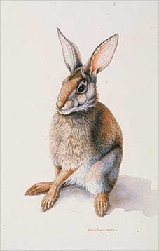 Easter will be here in a few weeks. Here are some photos for inspiration as you think about ways to celebrate this season of rebirth . Watercolor Portrait Painting, Bunny Art, Chipmunks, Historical Sites, Easter Bunny, Sally, Mammals, Rabbit, Wildlife