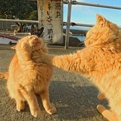 What did you call me? - your daily dose of funny cats - cute kittens - pet memes - pets in clothes - kitty breeds - sweet animal pictures - perfect photos for cat moms I Love Cats, Crazy Cats, Cute Cats, Funny Cats, Animals And Pets, Baby Animals, Funny Animals, Cute Animals, Animals Images