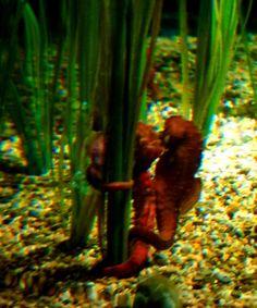 sea horses | seahorses | Seahorses