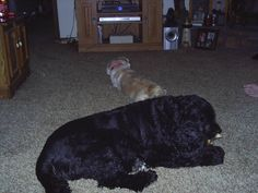 Sophie and My dear Charlie! I sure miss him. He was the best dog I had ever owned. He was my buddy!! We called him.... Mr. Personality!!!!