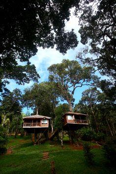 Tree House Resort in Munnar Kerala, India
