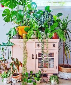 Love this whimsical eclectic look. Painted pink vintage cupboard works perfectly with LOTS of bright tropical plants! Indoor Garden, Indoor Plants, Home And Garden, Decoration Plante, Plants Are Friends, Floating House, Of Wallpaper, Plant Decor, Home Decor Inspiration