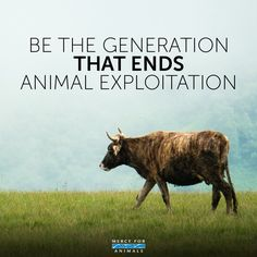 be the generation that ends animal exploitation -- why finance cruelty?