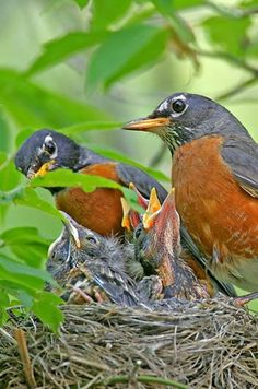 They're not done yet! Learn the bird nesting basics of these late nesters and find out how to attract them to your yard.