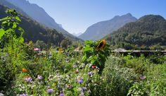 Blick auf die Berge rund um Bad Reichenhall. Idylle pur - hier kann man sich richtig perfekt erholen. Schon auf den ersten Blick!