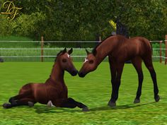 Sims 3 Foals may foal crop 2014 | ... Ride by Storm Cat) may be available in the crop, but still undecided