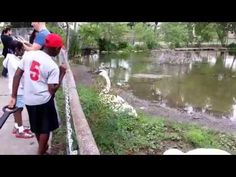 This Guy Tried To Take A Selfie At the Zoo. Bad Idea. | Vidworthy – Funny videos, humor, fail, stunts, pranks, leaks