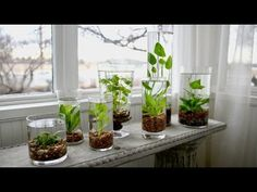 49 Indoor Water Garden Ideas That Make Your Home Fresh is part of Water garden plants - There are several sorts of plants you may grow indoors including tropical houseplants There are two kinds of plants it … Water Plants Indoor, Water Garden Plants, Aquatic Plants, Water Gardens, Plant In Water, Garden Ponds, Indoor Plant Decor, Indoor Water Fountains, Plantas Indoor